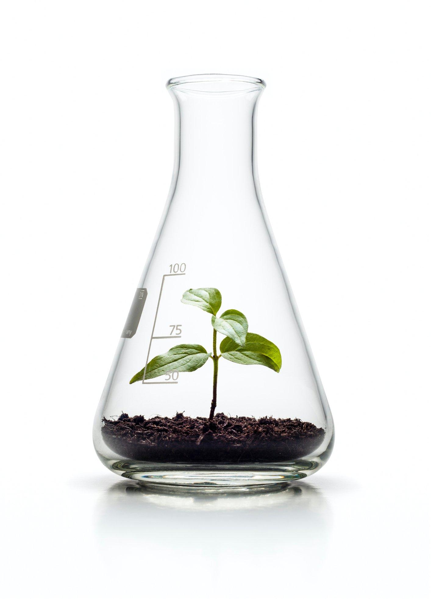 PlantInBeaker-1